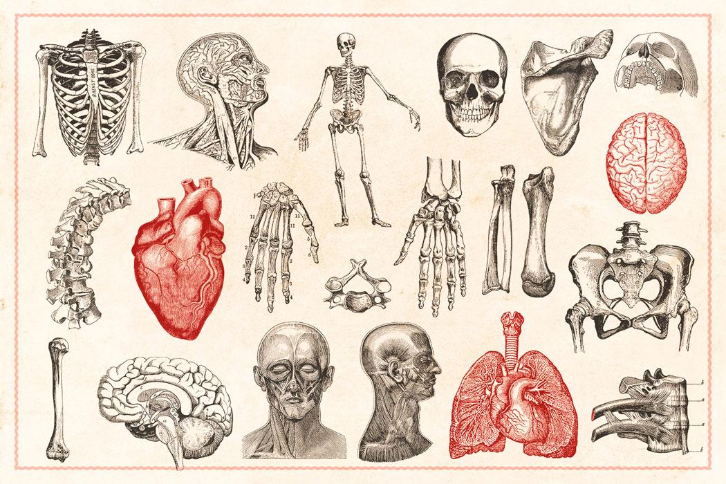 Anatomía y Fisiología B | Escuela IGEM | Institut Guxens de Medicina ...