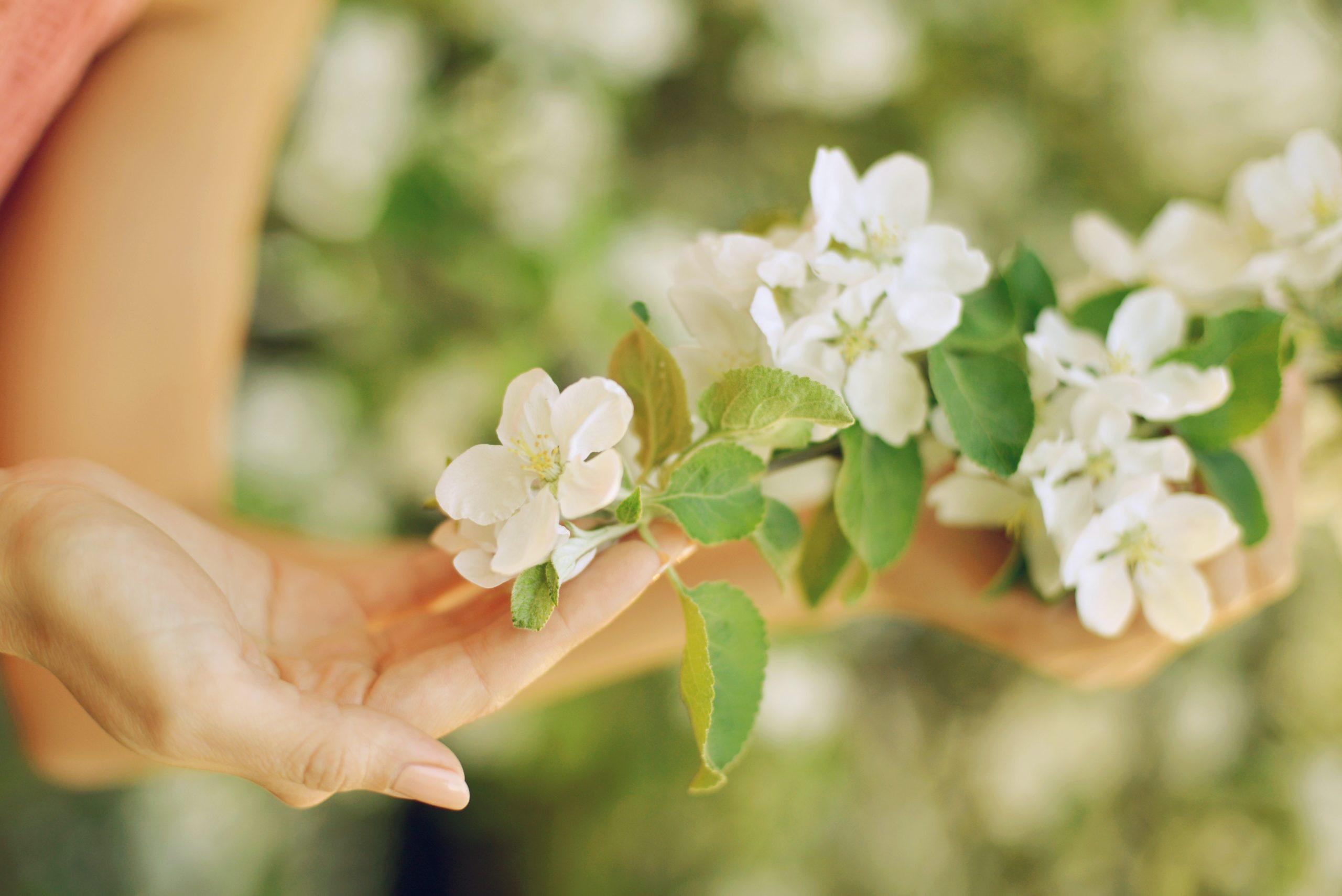 crecimiento_personal_flores_bach_medicina_natural
